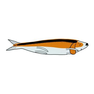 beagle sardine II