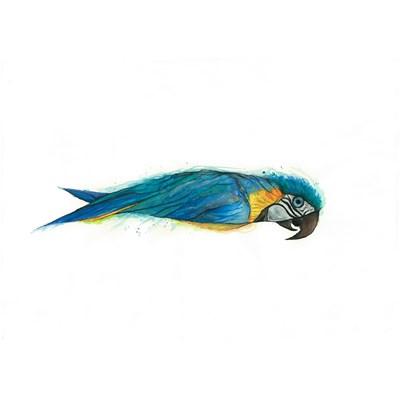 A sardinha que queria voar